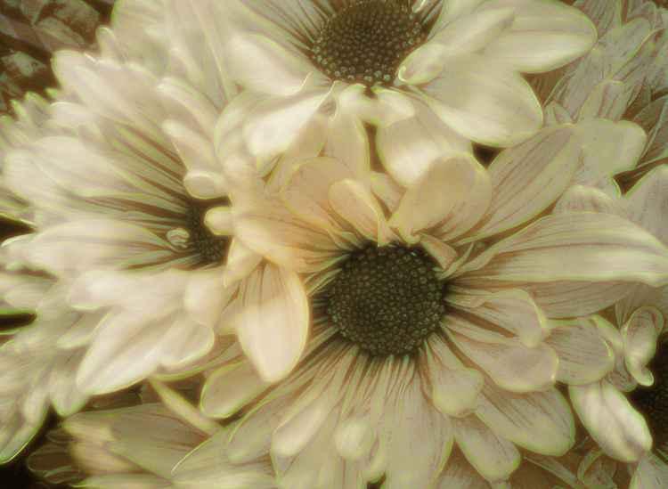 Artsy Flowers #6