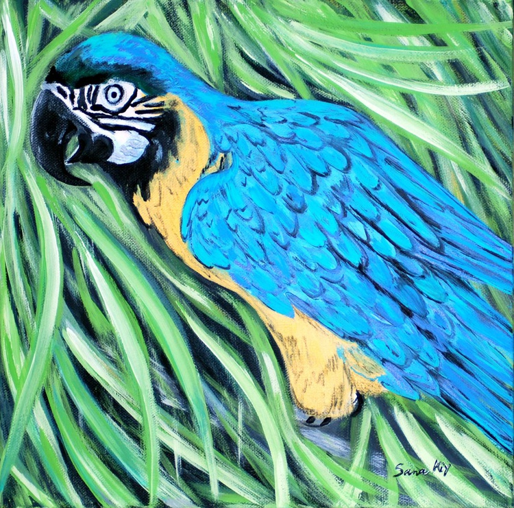 Blue and Yellow Macaw - Image 0