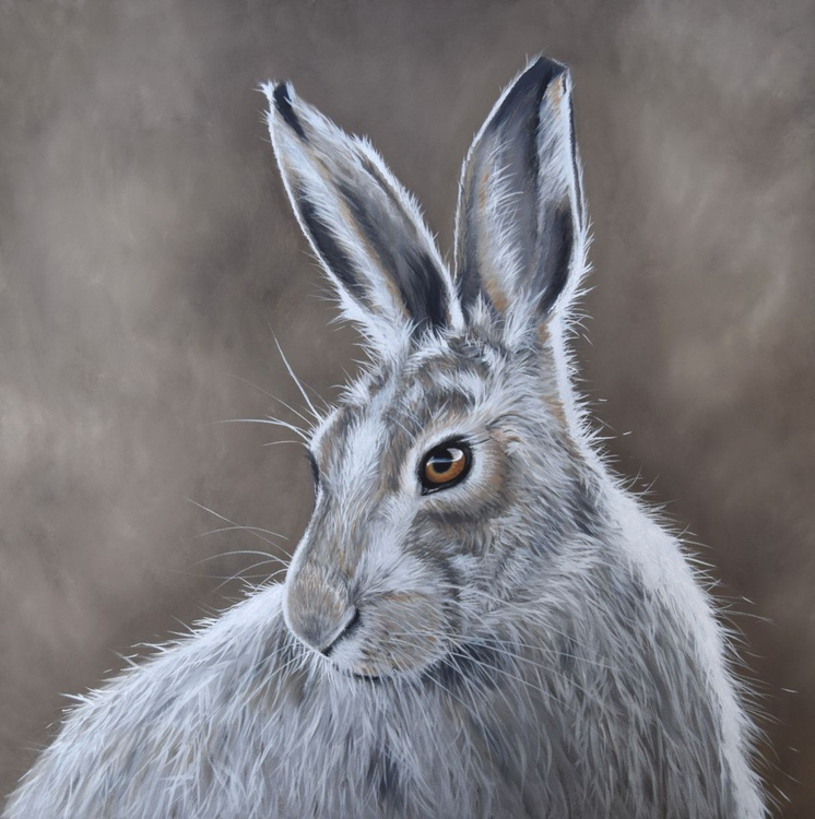 'Mountain Hare' - Image 0