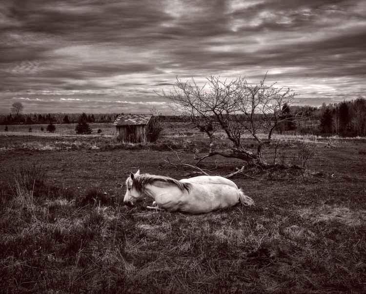 A SICK HORSE -