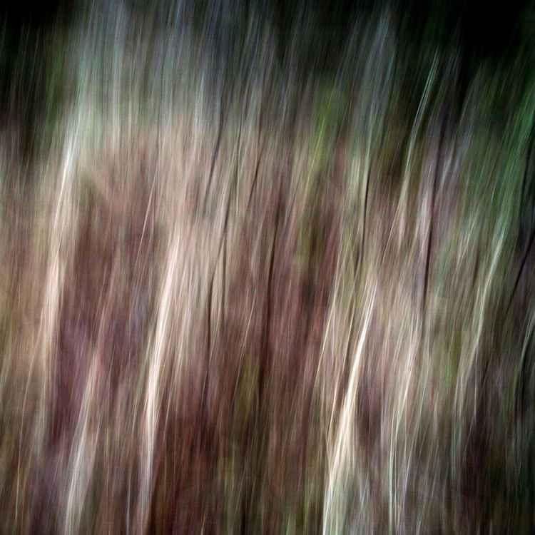 Autumn Colors fig. A