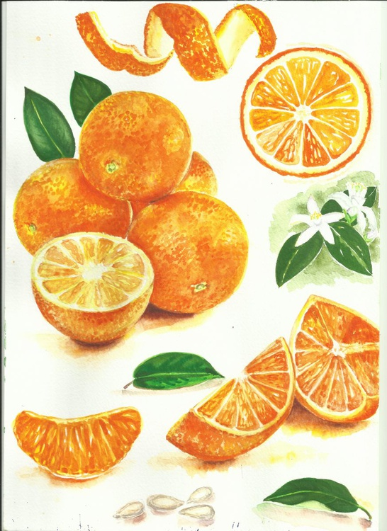 Everything about oranges.(Original Painting for Kitchen/Dining Decor Art) - Image 0