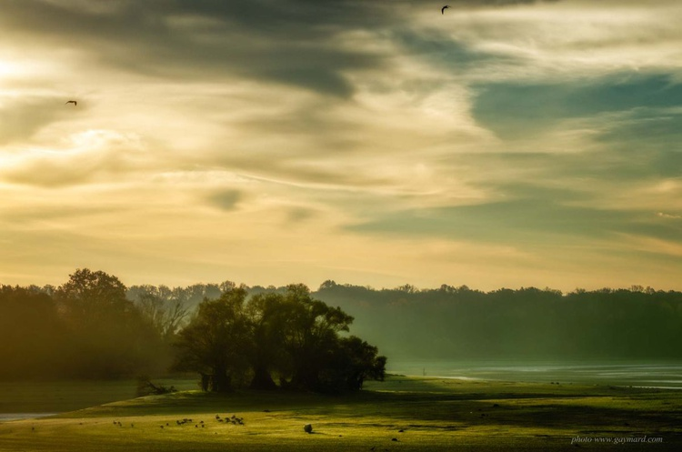 Twilight on the meadow / Poster - Image 0