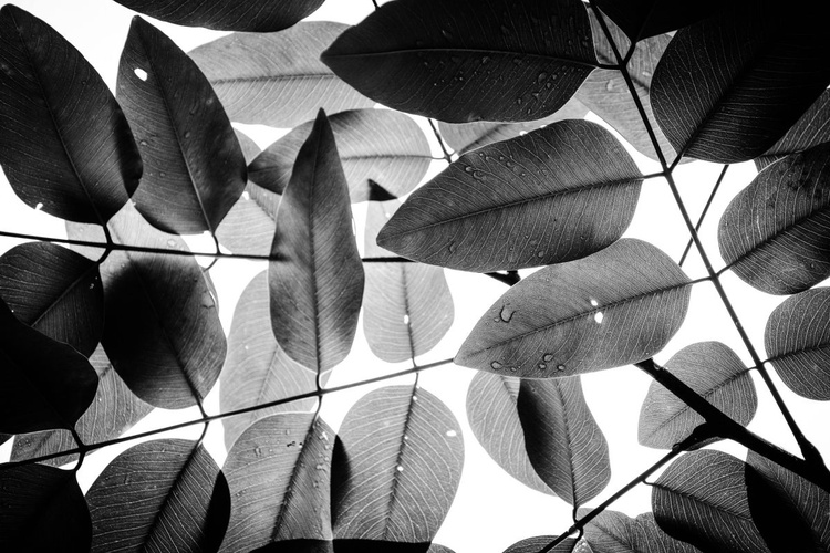 """""""Experiments with Leaves 2015 2"""" - Image 0"""
