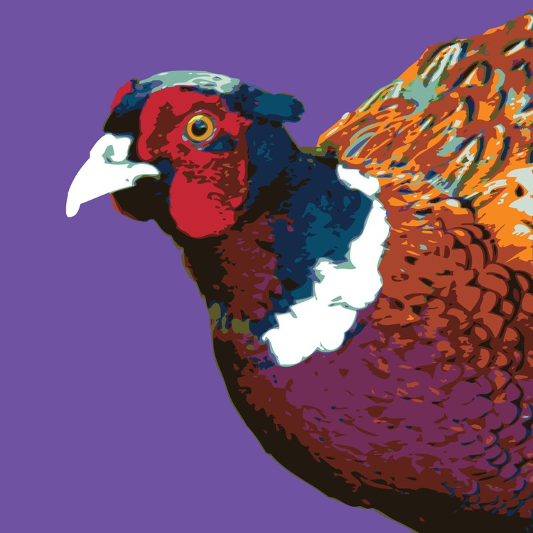 Phil the Pheasant - Image 0