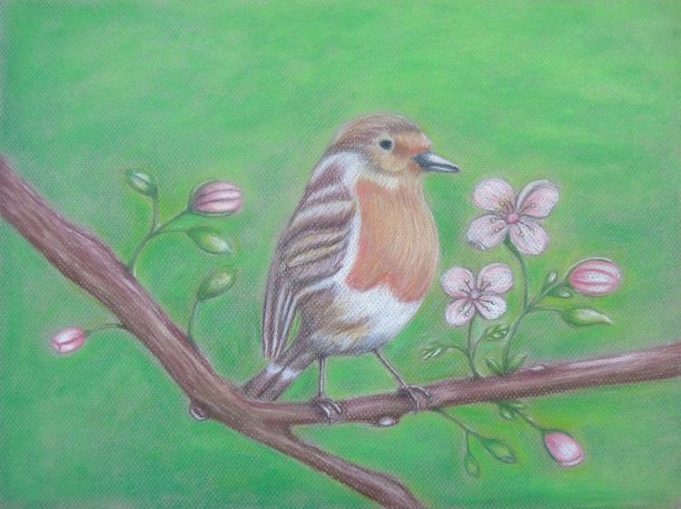 Robin Bird with Cherry Flowers - Image 0