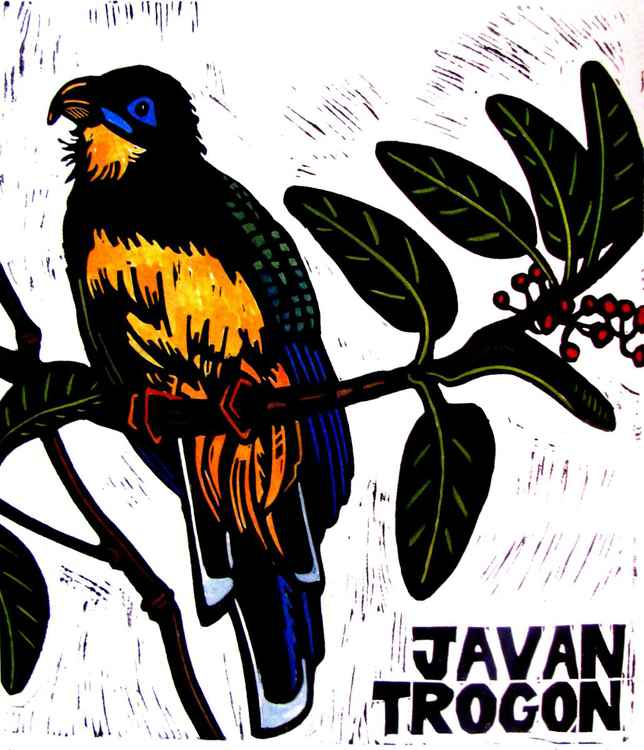 J is for JAVAN TROGON -