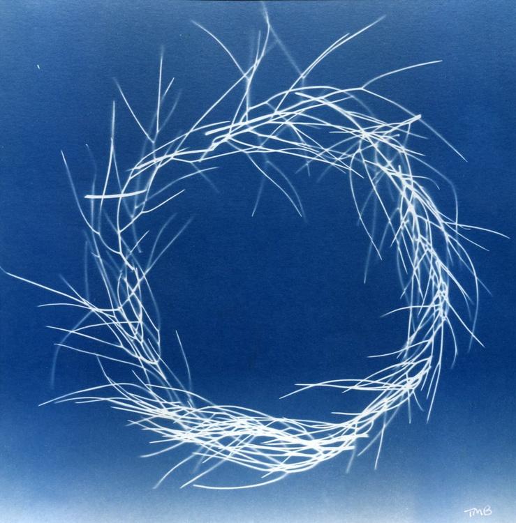 Fennel Circle - Image 0