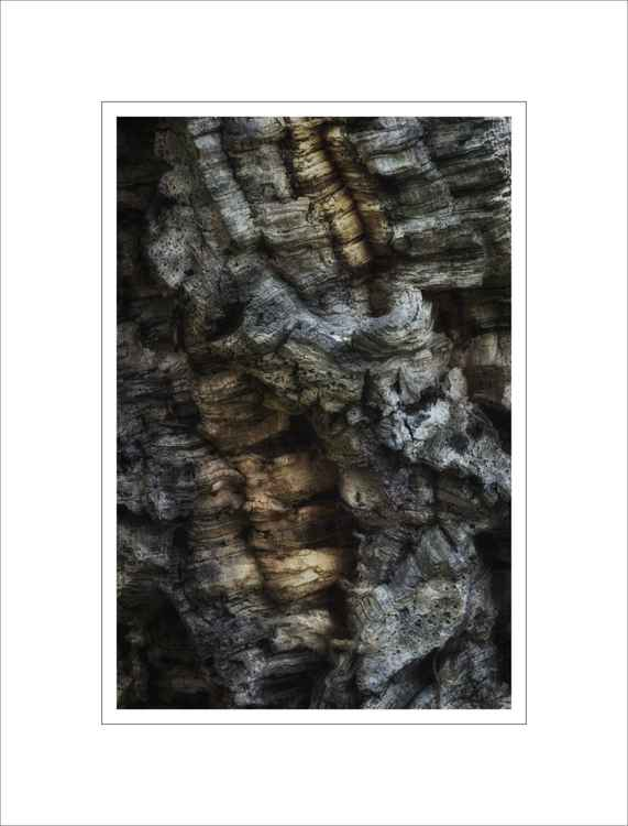 Bark Study 27 -