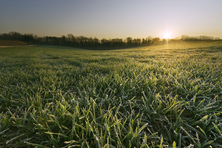 Frost Spring Morning - Image 0