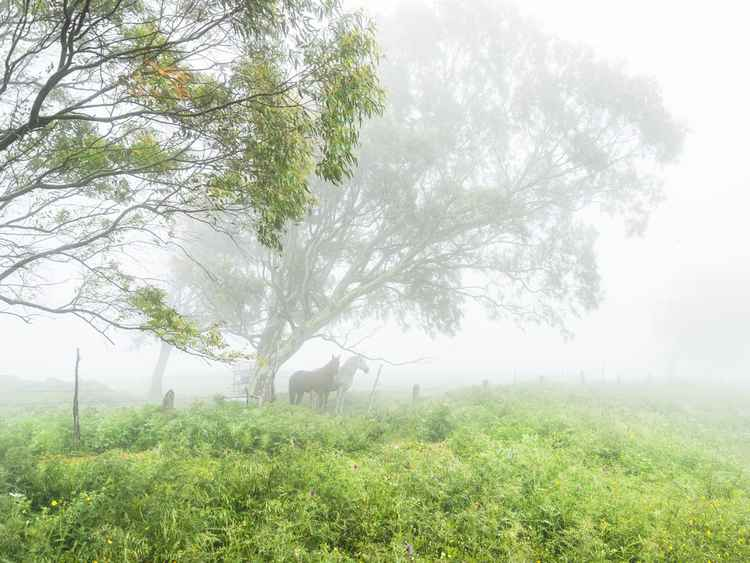HORSES IN THE MIST -