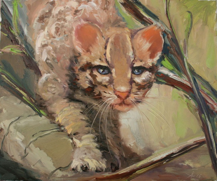 Young ocelot - Image 0
