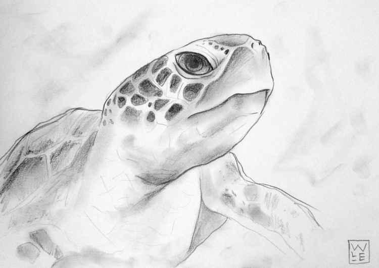 Sea Turtle -