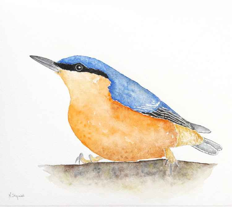 The Eurasian nuthatch (Sitta europaea)