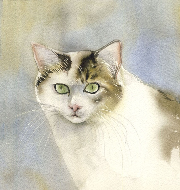 yellow and white cat - Image 0