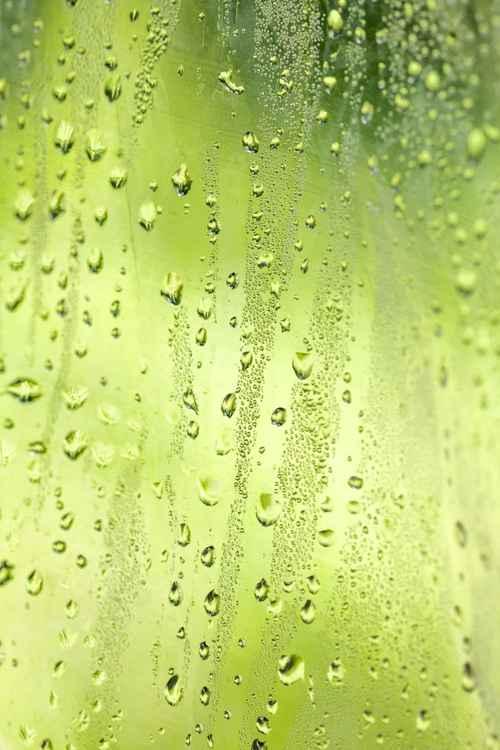 Summer Rain -