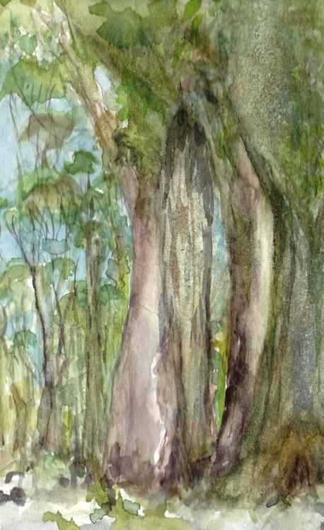 Buy Gum - Eucalyptus - Australian Hinterland - Image 0