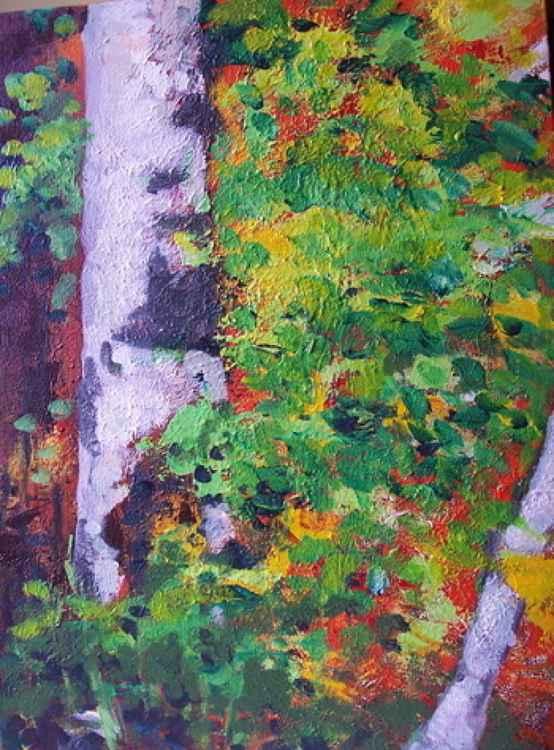 white poplar -