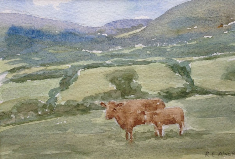 Cows, Wye valley - Image 0