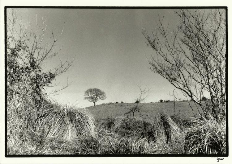 1985-89 Archive 006 Distant Tree - Image 0