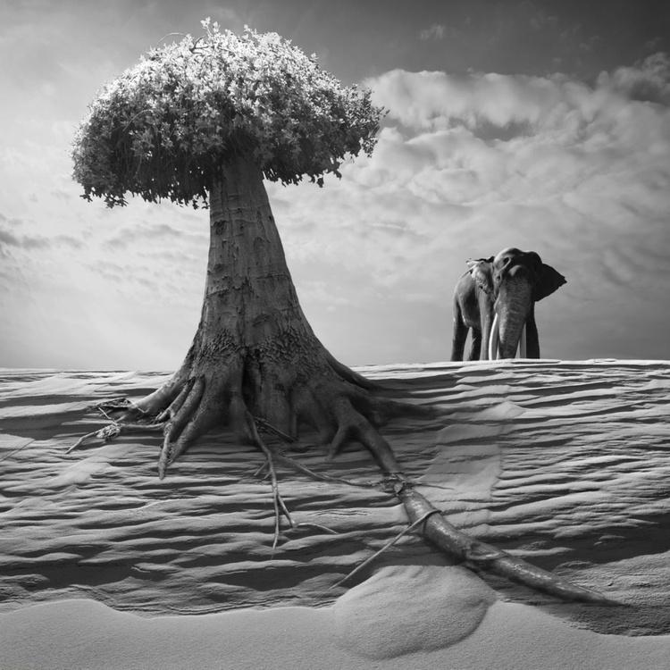 Elephantree - Image 0