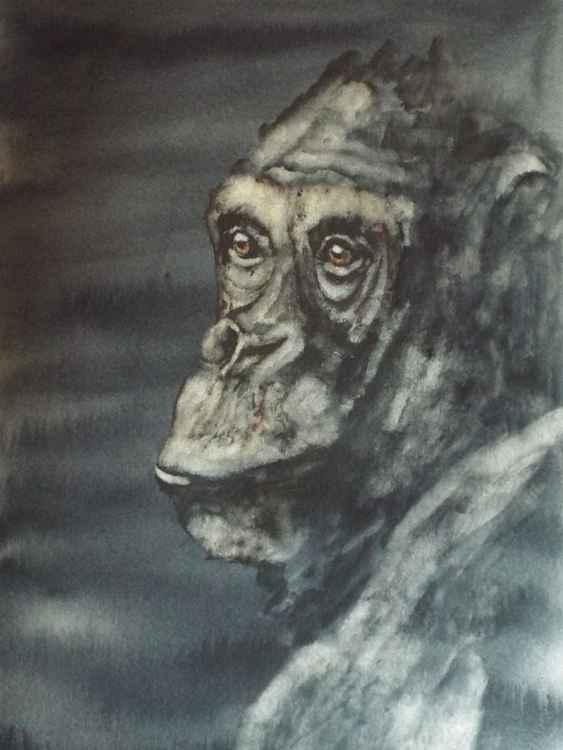 Chimp -