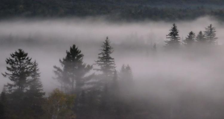 Morning Fog 9 - Image 0