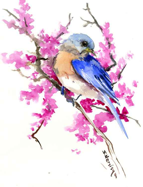 Eastern Bluebird and Spring Blossom -