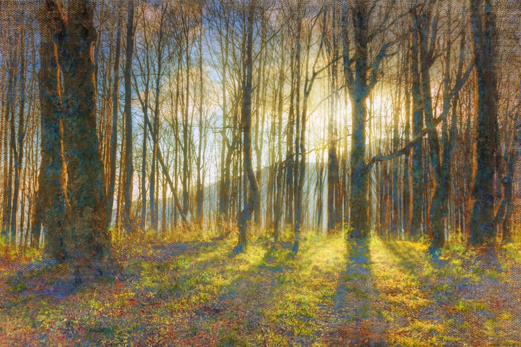 Early morning  in the forest. - Image 0