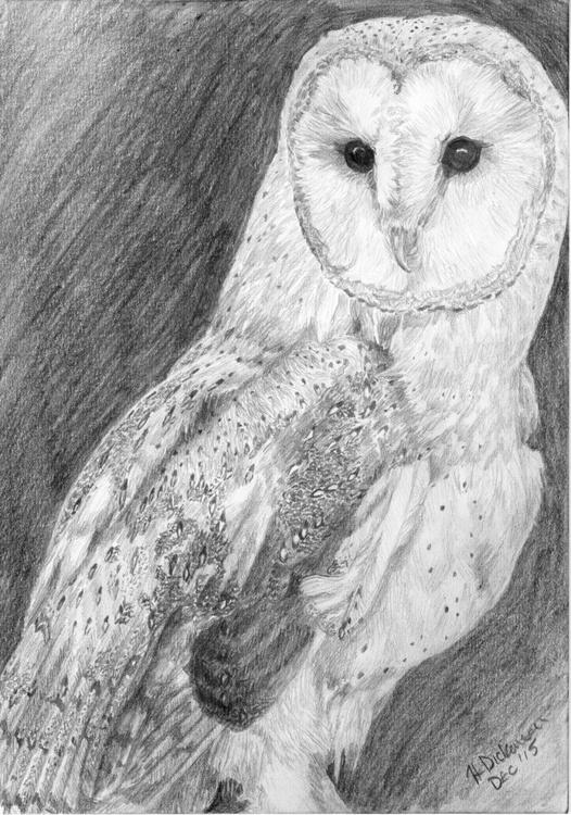Barn Owl - Image 0