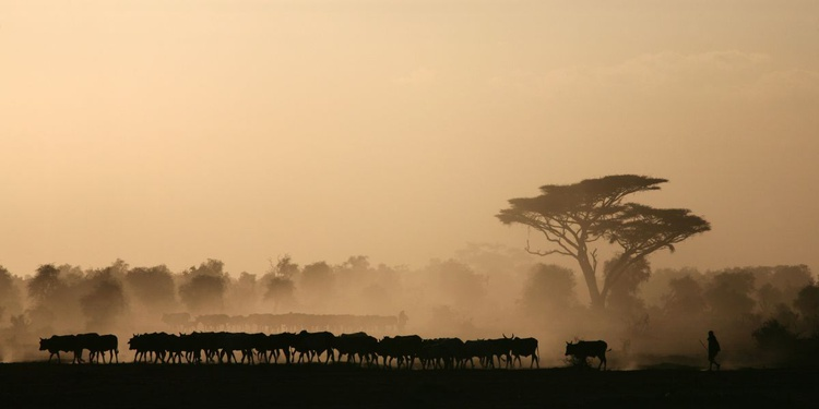 Amboseli - Image 0