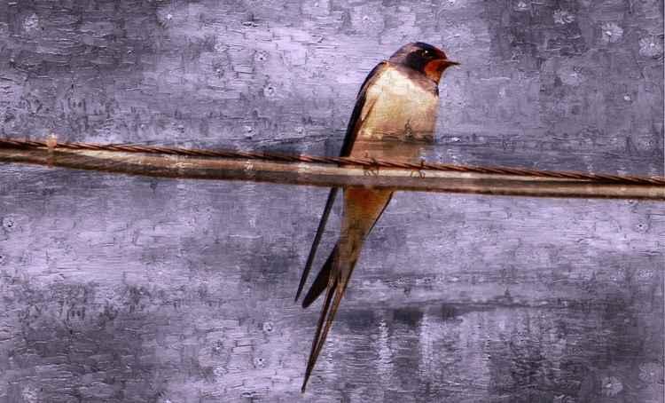 Bird On A Wire (Canvas)
