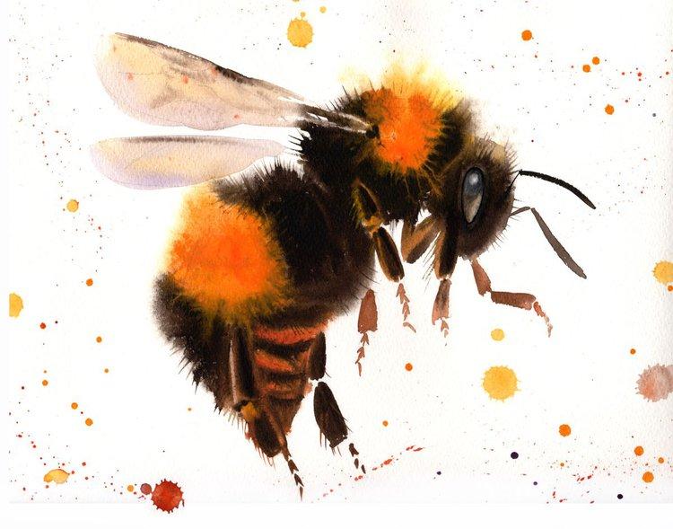Bumblebee In Flight 2