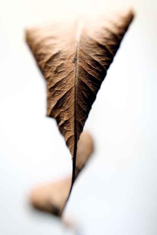 Leaf #10 -