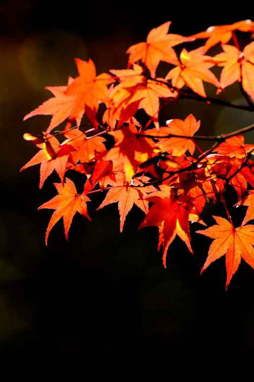 Fall at Shinnyodo Temple, Kyoto, Japan -