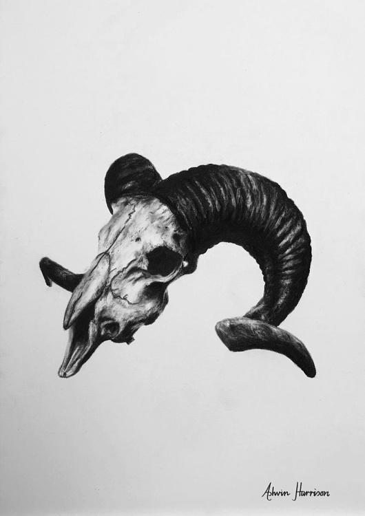 Ram Skull - Image 0