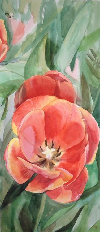 Dancing tulips - 2 - Image 0