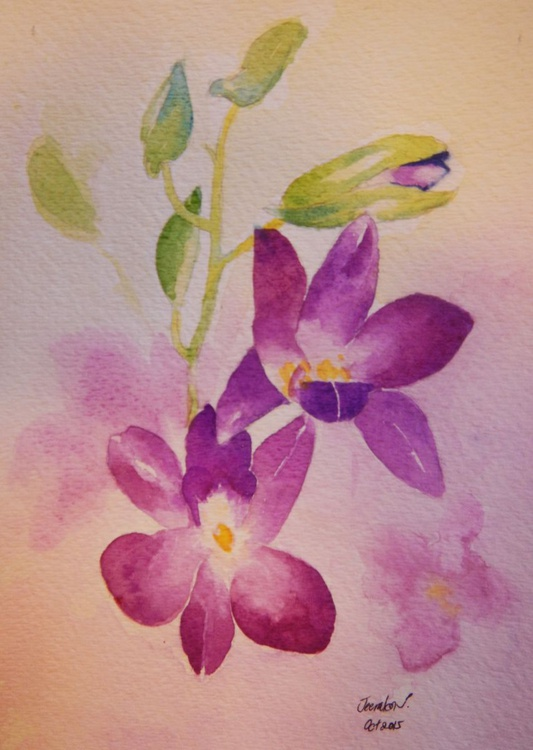 Thai Orchid - Image 0