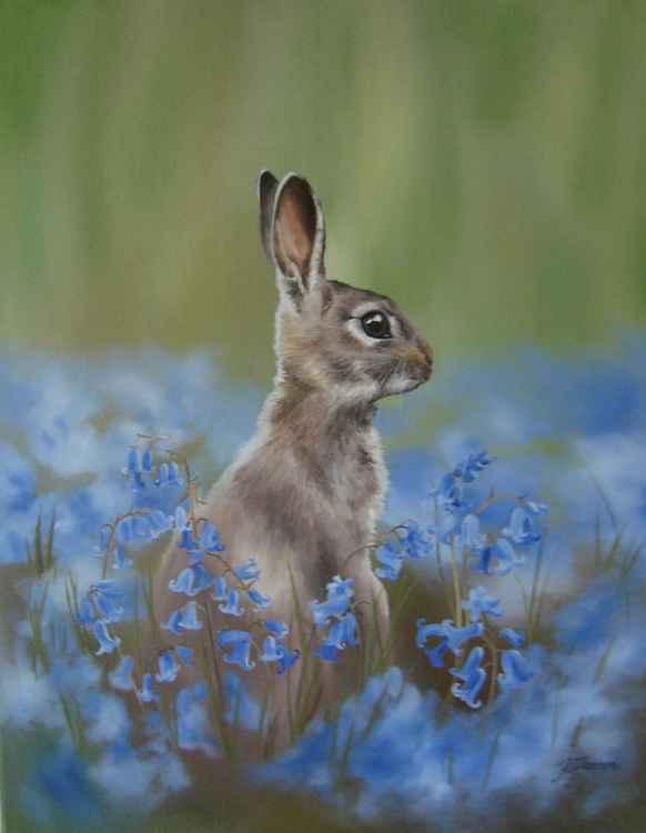 Rabbit among bluebells 20x16