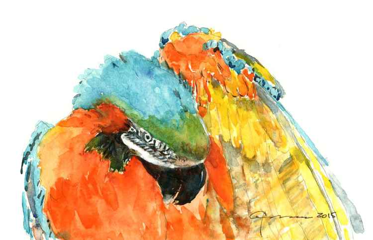 Blue Gold Macaw Parrot -