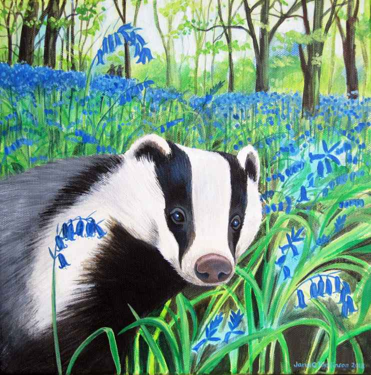 Badger and bluebells  -