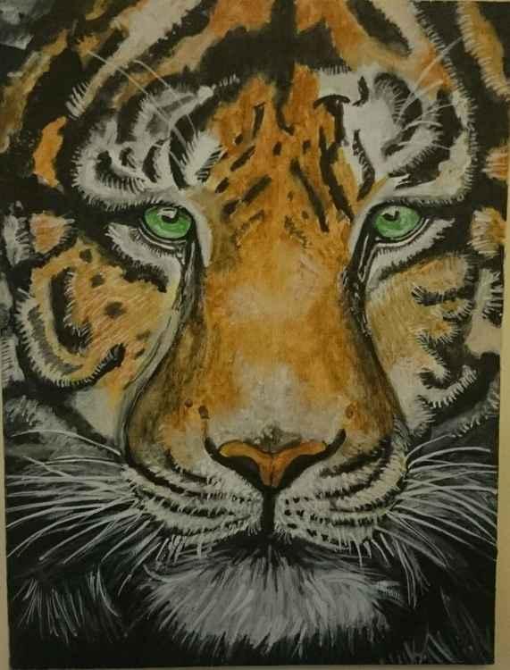 'Tiger' -