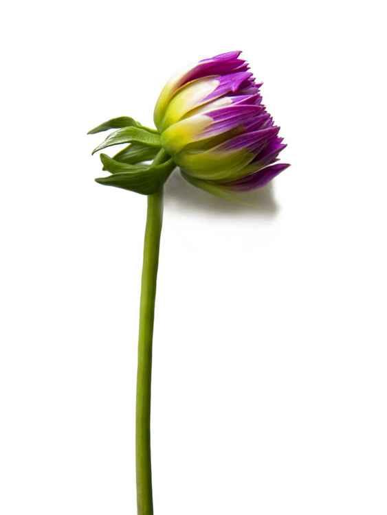 Botanical 5 -
