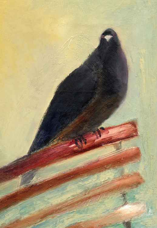 Kingly Court Pigeon -