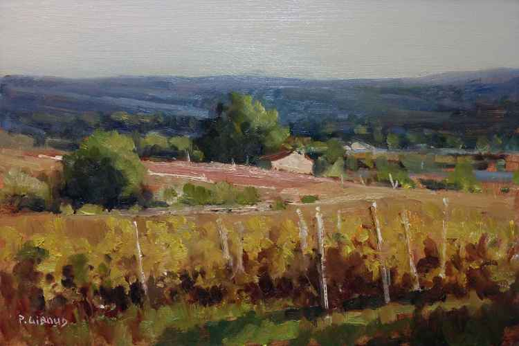 Autumn Vineyards in Vaucluse