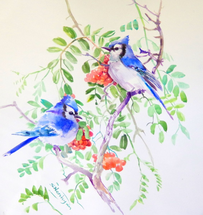 Blue Jays on Rowan Tree - Image 0