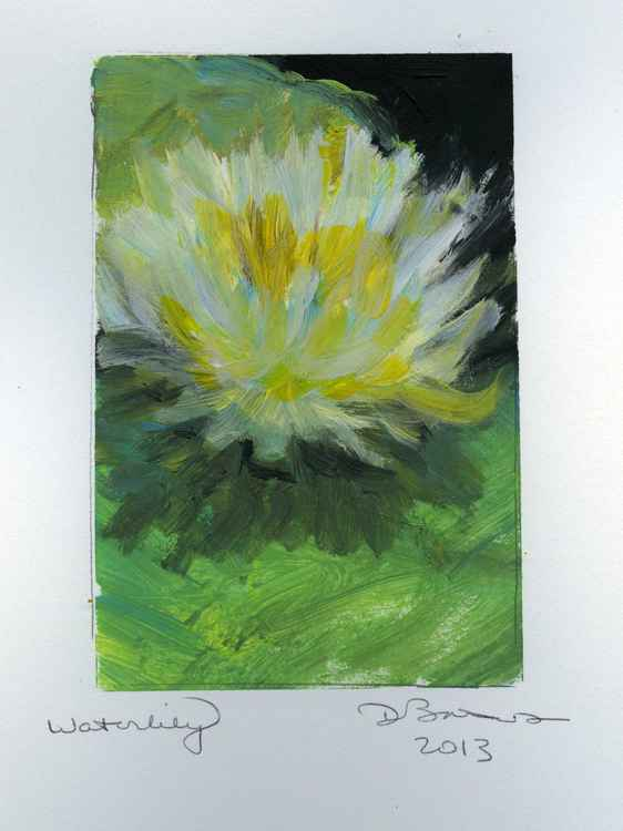 Waterlily -