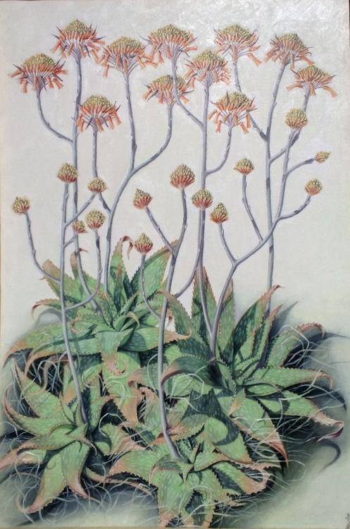 Aloe Maculata Cluster - Image 0