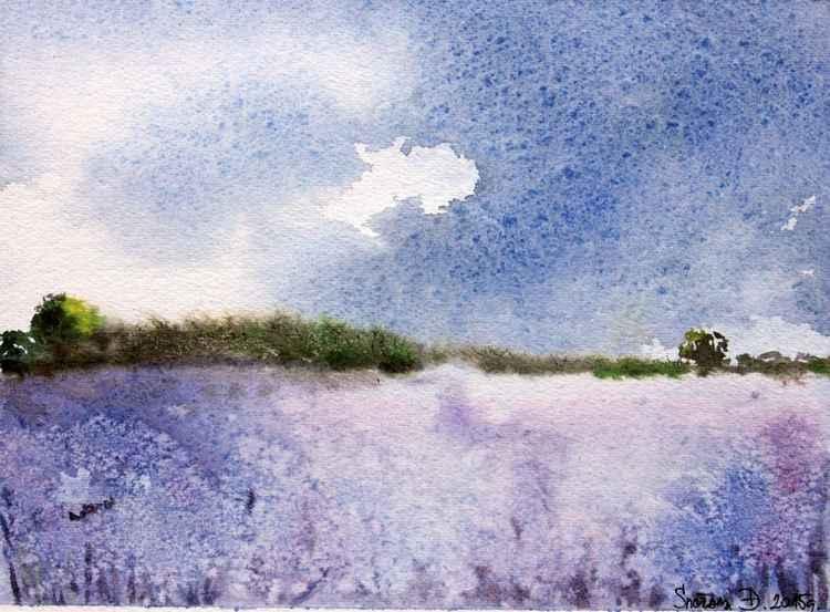 Lavender field -