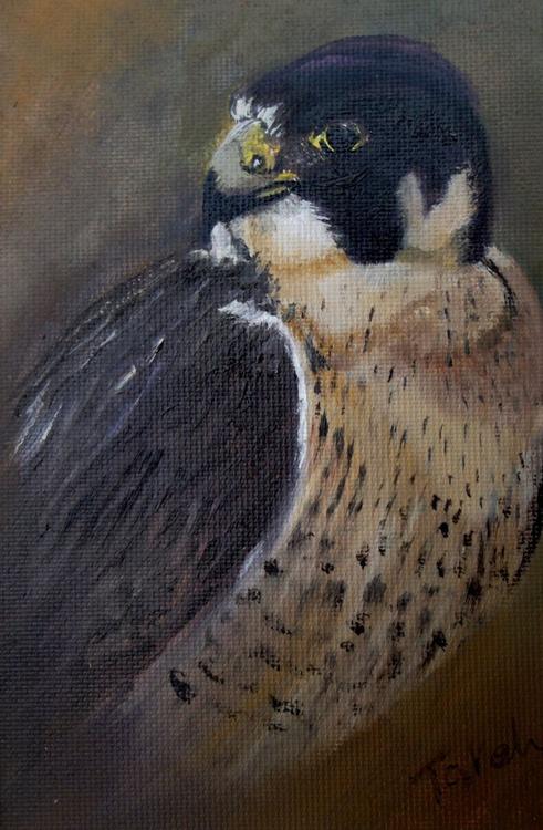 [219] Peregrine Falcon - Image 0
